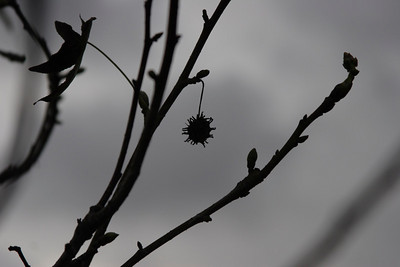Silhouette of a tree with a seed on it.