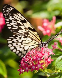 021211butterflies_13