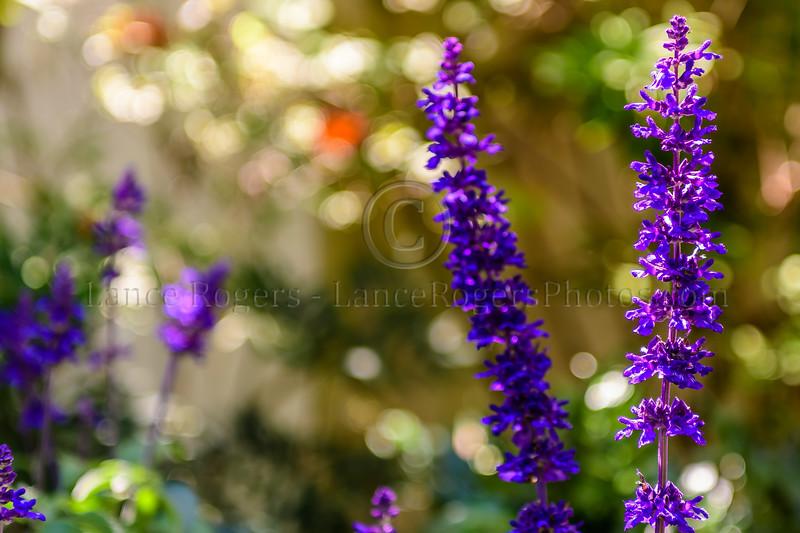 Fragrant Garden, Forsyth Park, Savannah, GA
