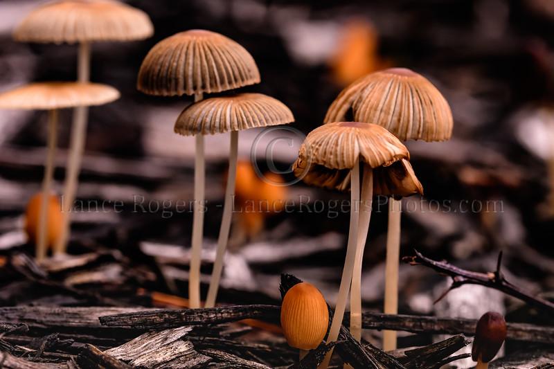Mushrooms after the rain