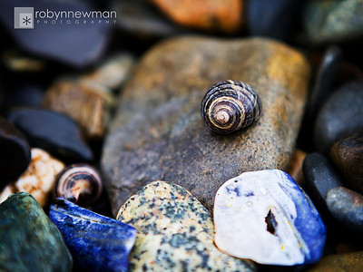 Rocks and shells on a beach on Mount Desert Island in Maine