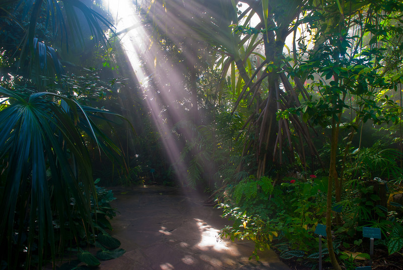Conservatory, Rain Forest Section<br /> Fort Worth Botanical Gardens