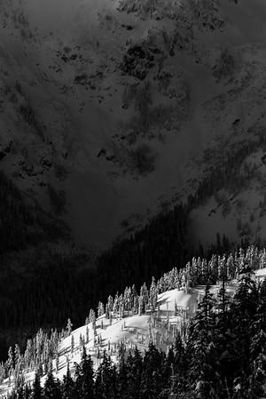 Sunlight and shadow.  Central Cascades, Washington
