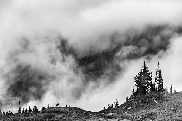 Deer on a cloudy ridge.  Central Cascades, Washington