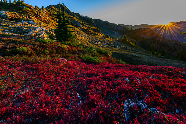 Sunset and huckleberries, Yellow Aster Butte, North Cascades, Washington