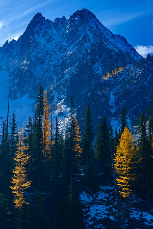 Golden larches, Enchantment Wilderness, Washington