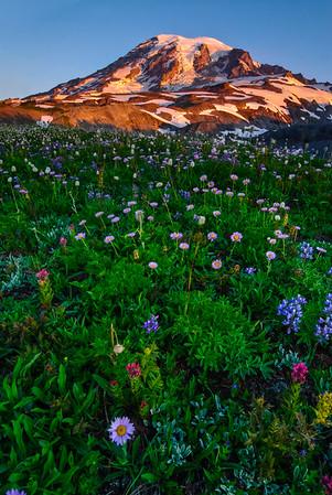 Mt Rainier wildflowers, Washington