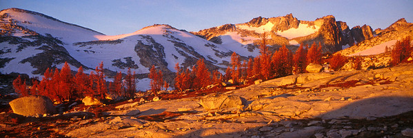Morning light on larches in the Enchantments, Central Cascades, Washington