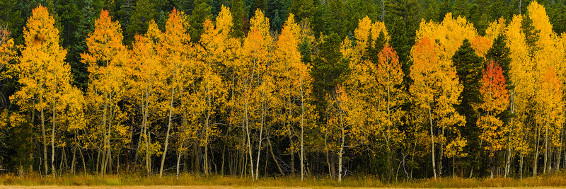 Autumn aspen, Colorado