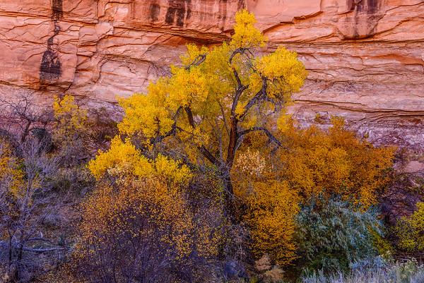 Redrock and CVottonwood, Grandstaff Canyon, Moab, Uath