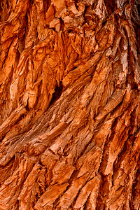 Cottonwood bark, Utah