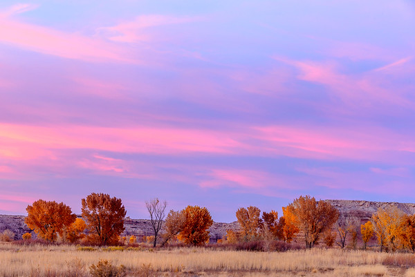 Pink sky and cottonwoods, Utah