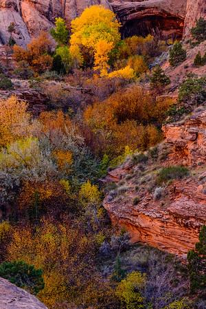 Fall colors in Grandstaff Canyon, Moab, Utah