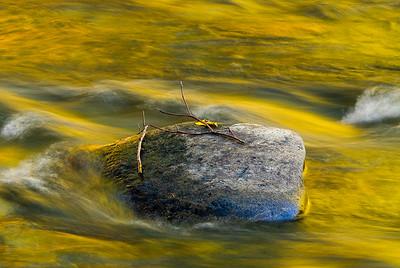 Stranded, Wenatchee River, Washington