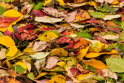Fallen foliage, Leavenworth, Washington