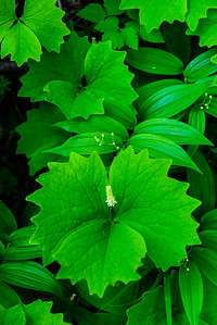 Green, Olympic Peninsula, Washington