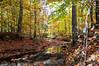 Autumn in Charlotte, North Carolina.