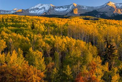 Autumn aspens on Kebler Pass, Colorado
