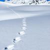 Tracks, International Basin, British Columbia