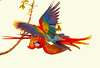Scarlet macaws Playing  2