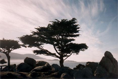 Dawn, on Seventeen Mile Drive, Pebble Beach, CA