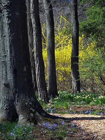 Spring, Pepsico Arboretum, Harrison, NY