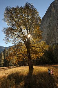 El Capitan Meadow Sunrise