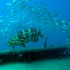 Goliath Grouper on the Thunderbolt Wreck - Marathon, Florida