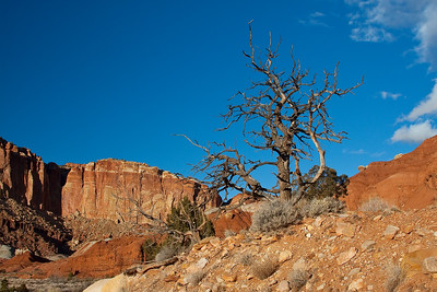 Capital Reef National Park