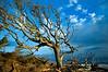 georgia jekyll island beached trees