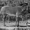 Zoo Anna Frank 299