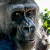 Zoo Anna Frank 233