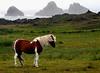 Icelandic pony DSC_1066b edit lighten pony