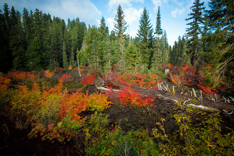 Fall Colors, Willamette National Forest, Oregon