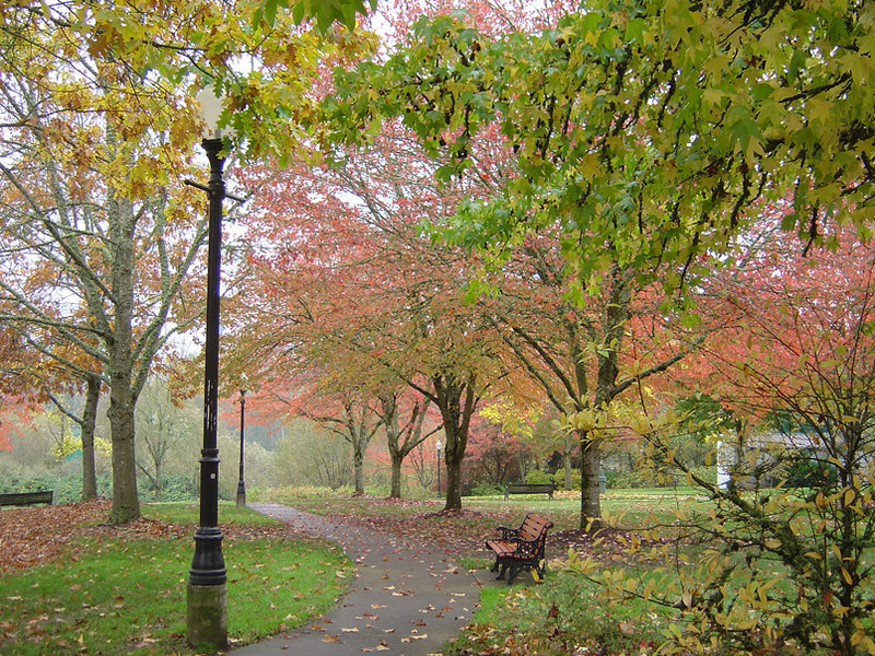 Fall in Monteith Park, Albany