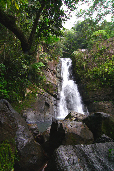El Yunque National Rain Forest, Puerto Rico