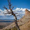 Lone Tree, Montezuma Valley Overlook