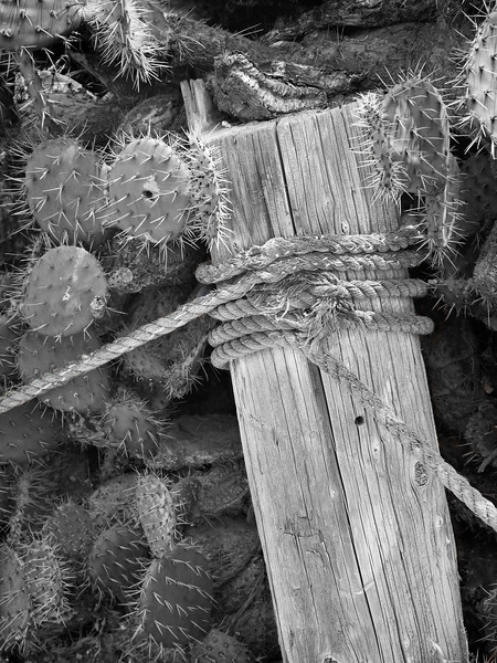 Post and Rope with Cactus