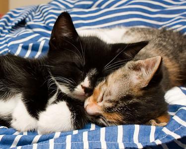 Velma and Mr. T snuggle kittens