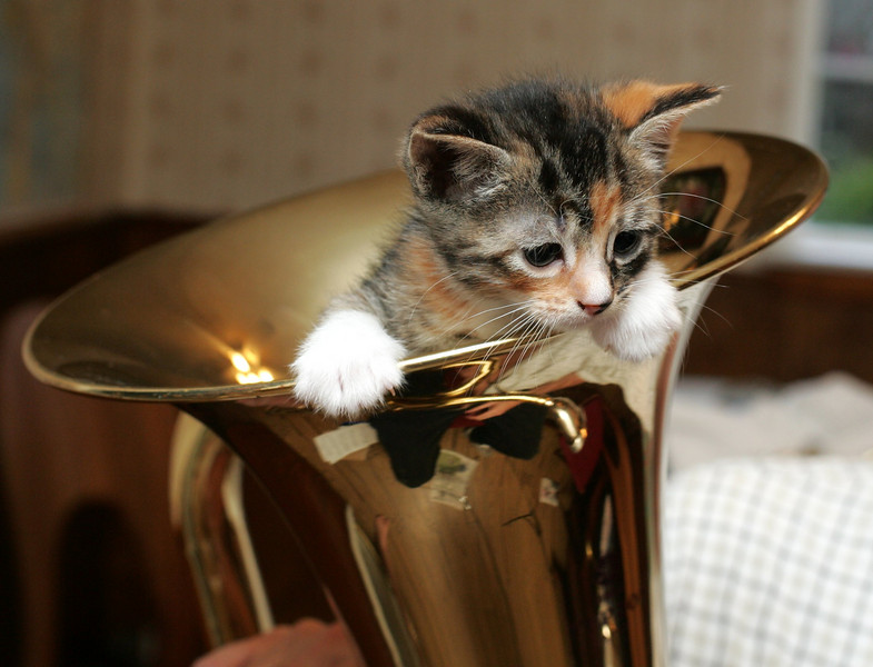 Velma in the Euphonium