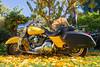 Pumpkin Rides