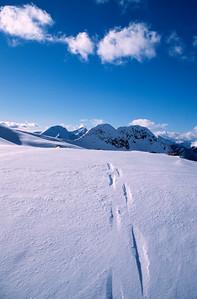 Tracks to nowhere, Valhalla Range, British Columbia