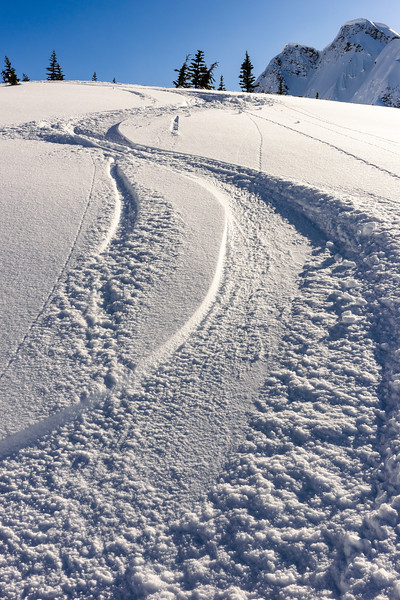 Tracks, Coast Range, British Columbia
