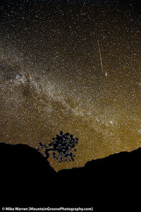 Lone Pinion, and a Meteor in the Desert Sky, Zional National Park, UT