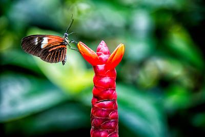 Butterfly, Key West, FL