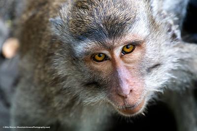 Sacred Monkey Forest, Bali, Indonesia.
