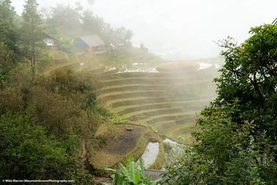 Rice fields in Sa Pa, Vietnam.