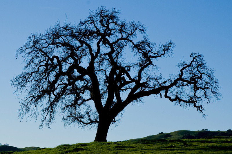 From Alhambra Valley Rd., near Briones Park
