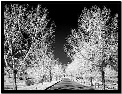 Ref #3577-S Photo © LenScape Photography