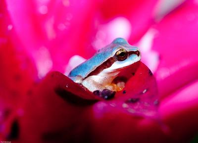 Masked Tree Frog Flower